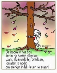 herfstboom loslaten